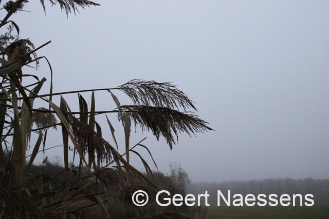 Herfstig weekend met veel wind, regenperioden en zachte temperaturen