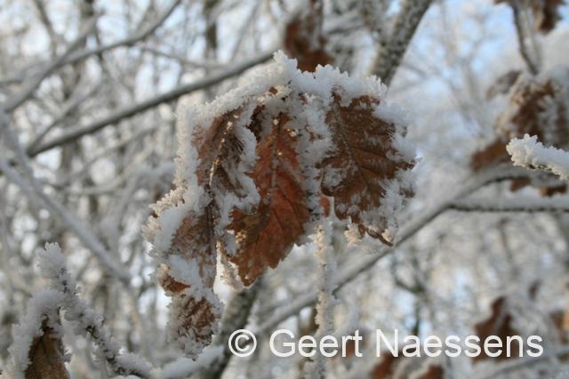 Winter blijft opspelen; mist, koud en nog sneeuw op komst