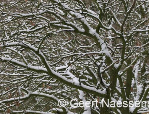 De massale sneeuwdump in de Alpen: hoe komt dat?