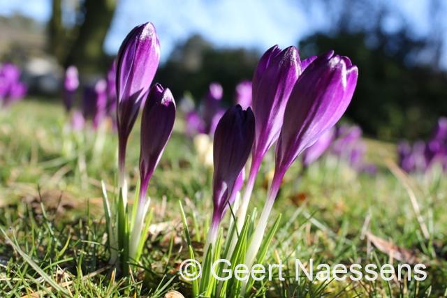 Opnieuw een mooie, zonnige en zachte lentedag
