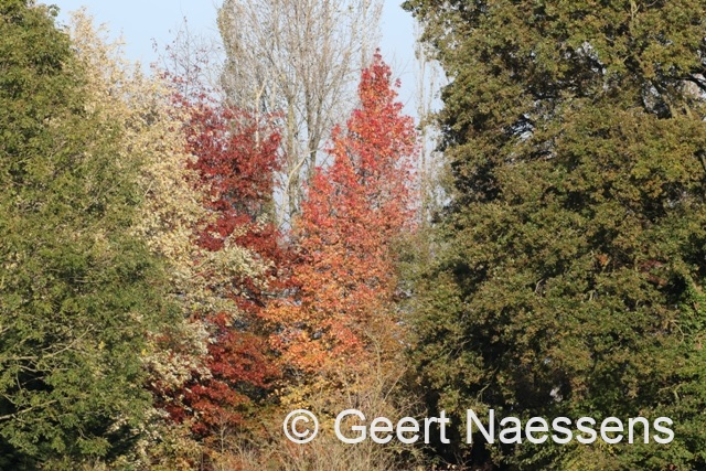 Na een mooi weekend volgt vandaag compleet herfstweer