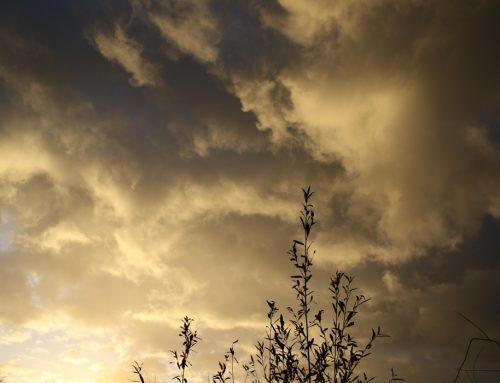 Nog wat zon, snel meer wolken, uiteindelijk kans op een bui