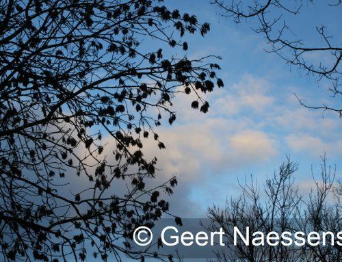 Waaiende wind en enkele (perioden met) (felle) buien