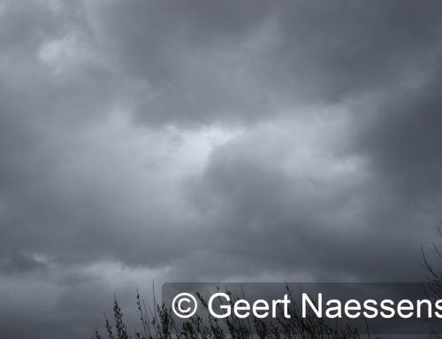 Storm Ciara trekt vandaag met volle geweld over onze regio!
